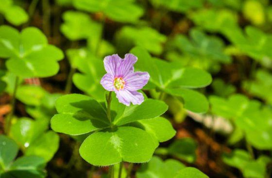 گیاهانی که در سفر با خیال راحت می توان خورد